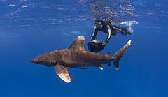 Акул бояться, в Египет не летать… Спрос на туры в Египет падает
