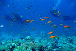 Красное море. Хургада