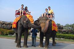 Прогулки на слонах. Паттайя