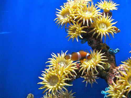 Аквариум подводный мир underwater world